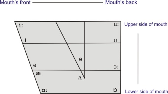 the diagram of oral cavity about the origin of vowel sounds<empty>